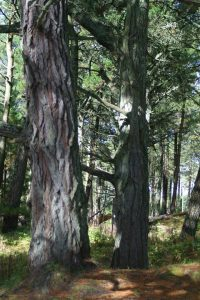Trees in Raven