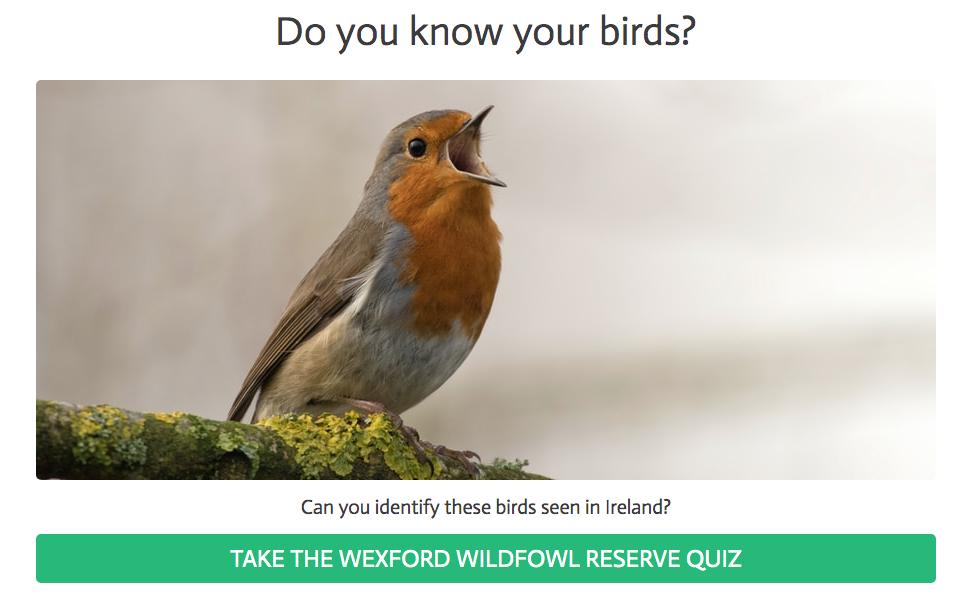 Bird Quiz