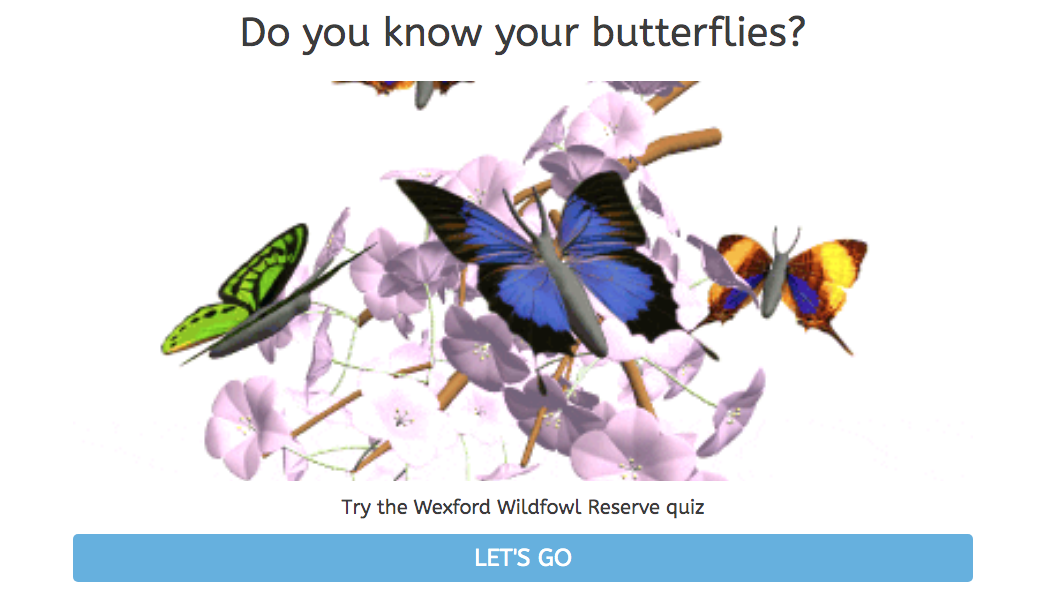 Butterfly Quiz